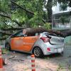 Sài Gòn: Mưa lớn làm cây cổ thụ bật gốc, đè bẹp dúm ô tô