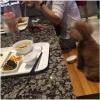 Cho chó ăn chung đĩa thức ăn, người phụ nữ bị lên án dữ dội