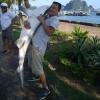 Xác minh cá lạ nghi là cá mập xuất hiện ở Vịnh Hạ Long