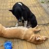 """Chú chó trung thành nhất quyết túc trực suốt đêm bên cạnh """"bạn thân"""" đã chết"""