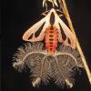Sự thật về loài sinh vật quái dị giống hệt bướm nhưng lại có 4 cái đuôi