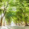 Hôm nay, Hà Nội hửng nắng sau những ngày gió lạnh đầu mùa, Sài Gòn lại mưa lớn và có giông mạnh