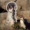 Chú chim cánh cụt già đem lòng yêu cô gái trong tấm bìa anime đã qua đời