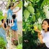Ngất ngây trước khu vườn xanh mướt trong căn nhà tiền tỷ của sao Việt
