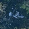 Xác định danh tính phi công người Việt gặp nạn trong vụ máy bay rơi ở Anh