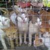 Hình ảnh những chú mèo đáng thương trong khu chợ thịt mèo nổi tiếng tại Việt Nam lên báo nước ngoài