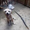 Liều mình cắn rắn độc cứu chủ, hình ảnh em cún nở nụ cười trước khi chết lấy nước mắt nghìn người