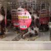 Cộng đồng mạng phát sốt với hình ảnh gián được rao bán tại Nhật làm... thú cưng