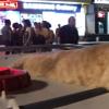 """Chủ nhân của chú mèo tên Chó ở Hải Phòng lên tiếng sau ồn ào bị """"ném đá"""" là ngược đãi thú cưng"""