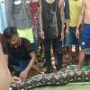 Kinh hoàng phát hiện thi thể người phụ nữ trong bụng con trăn dài 8m
