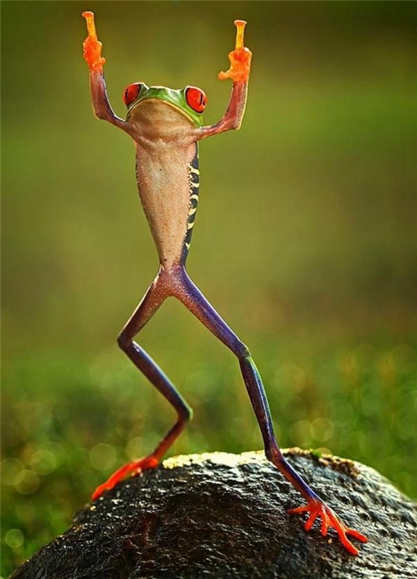 Tấm ảnh bắt đúng khoảnh khắc của một chú ếch qua bàn tay của nhiếp ảnh gia Shikhei Goh người Indonesia.