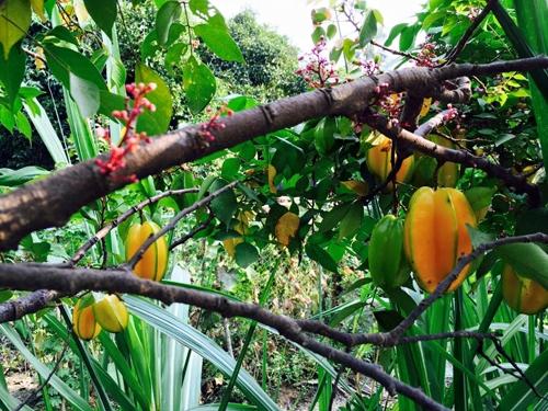 Đã mắt ngắm vườn rau sạch trong biệt thự triệu đô của sao Việt - Tin sao Viet - Tin tuc sao Viet - Scandal sao Viet - Tin tuc cua Sao - Tin cua Sao