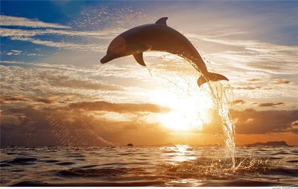 Chúng thuộc về biển lớn, thỏa sức vùng vẫy và cứu hộ tự nguyện mới là cuộc sống thực sự của chúng.(Ảnh: Internet)