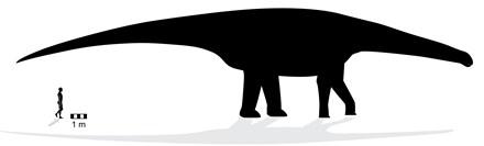 Đây làdấu chân này là củamột cá thể của họ khủng long Sauropod.