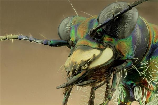 Gương mặt đáng sợ của những loài côn trùng qua ống kính nhiếp ảnh gia