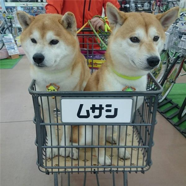 ...và lúc nào cũng theo mẹ đi mua sắm.