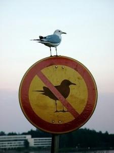 Cấm chim đậu à? Anh đây cứ đậu đấy, xem làm gì được nhau nào?