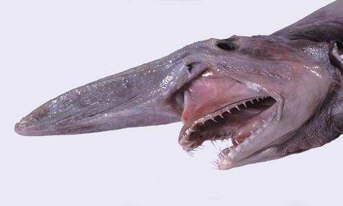 Dựng tóc gáy với những cái miệng đáng sợ nhất thế giới động vật