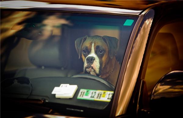 Cặp vợ chồng James Campbell (68 tuổi) và vợ Iris Fortner (56 tuổi) có nuôi một chú chó cưng. Vào ngày định mệnhấy, hai vợ chồng cùng chú chó vừa kết thúc một chuyến đi, và đã bước xuống xe. Bất ngờ chú chó bỗng nhảy lên và dậm chân vào cần tăng tốc. Chiếc xe lao đi, đâm vào Campell, cán qua người ông, khiến ông tử vong ngay tại chỗ. (Ảnh minh họa)