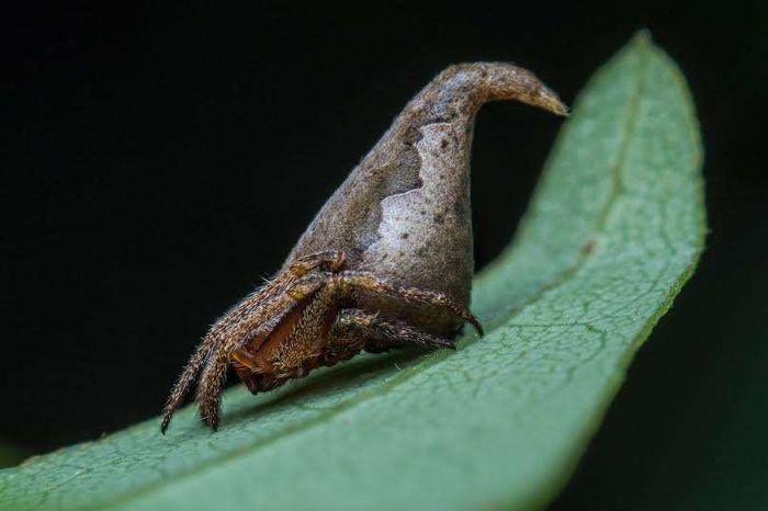 Chú nhện mang hình dáng chiếc mũ nhà Gryffindor nổi tiếng