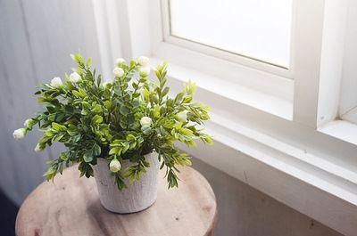 Khỏe mạnh, vui vẻ và may mắn chỉ bằng cách rước một trong số cây này về nhà