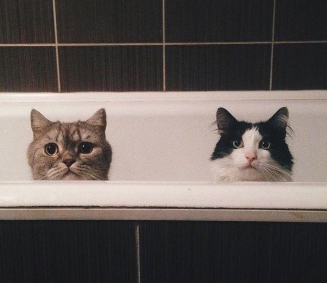 Trời ơi tui đi toilet mà cũng không yên với hai đại boss mà...