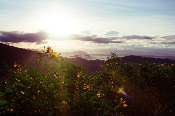 Một buổi chiều với hoa dã quỳ trên đỉnh Chư Đăng Ya.