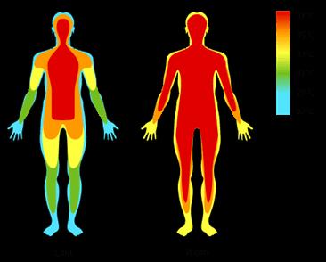 Thân nhiệt của con người giảm khi chìm vào giấc ngủ.