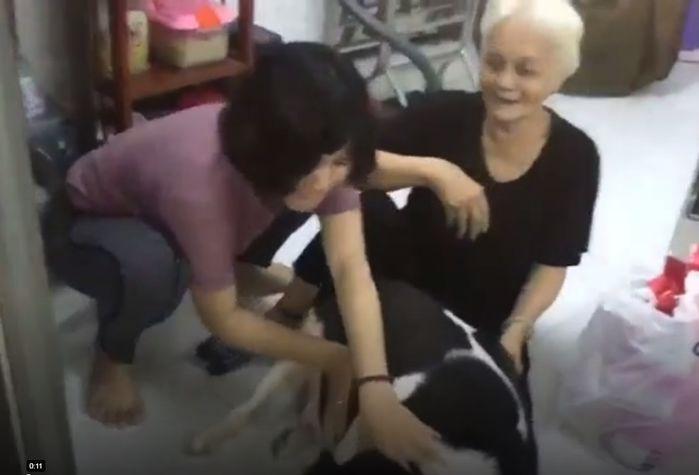 Cuộc chiến không khoan nhượng giữa chó và chủ (Ảnh chụp màn hình)