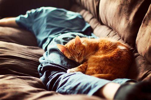 """""""Có cái ghế sofa mà cũng bị giành, thôi thì ta ngủ tạm trên người ngươi vậy""""."""