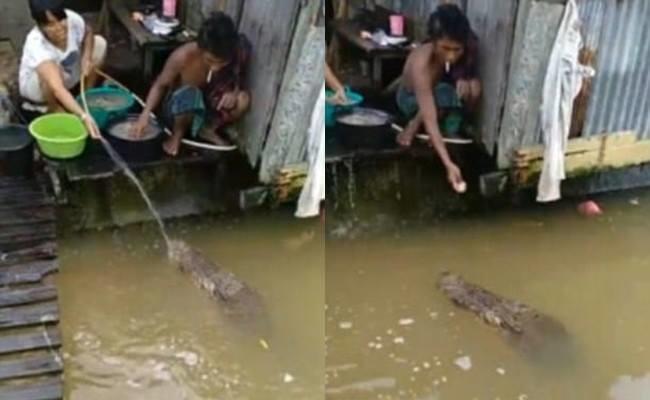 Con cá sấu không hề có phản ứng sợ hãi gì khi tiếp xúc với con người.