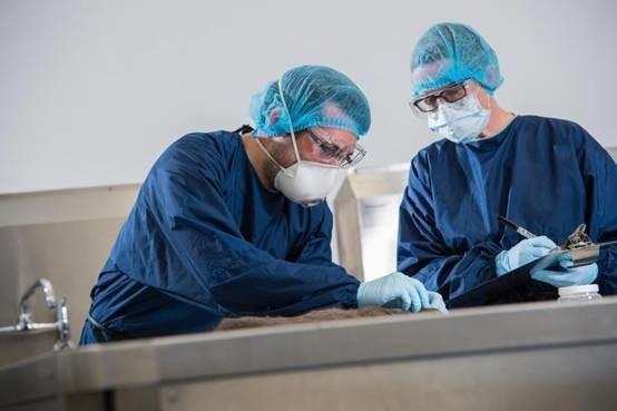 Các bác sĩ pháp ytiến hành xét nghiệm DNA, dấu vân tay...để hỗ trợ cuộc điều tra