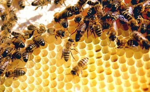 Để ong đốt sẽ thực sự rất nguy hiểm