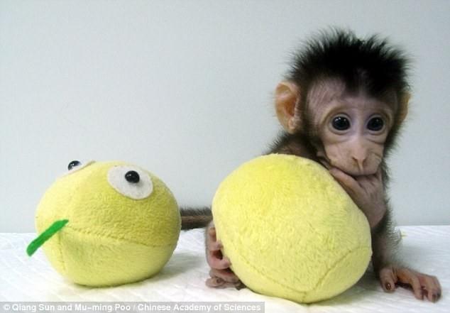 Liệu sau khỉ, có phải là con người?