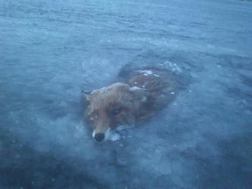Hình ảnh các loài động vật bị đóng băng trong mùa đông lạnh giá