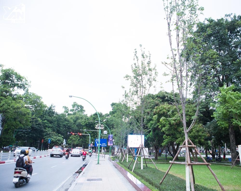 Hàng cây phong lá đỏ trên tuyến đường Thụy Khuê - Thanh Niên