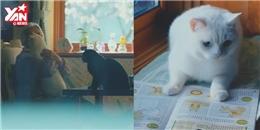 Đoạn video ngắn về hai chú mèo khiến người xem xúc động