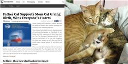 Gia đình mèo Việt bên nhau lúc vượt cạn xuất hiện trên báo nước ngoài