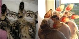 Ngỡ ngàng với khoảnh khắc 'siêu trùng khớp' của bộ đôi 'mèo song sinh'