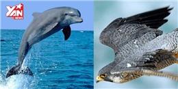 Bất ngờ với những kỉ lục về các giác quan ở động vật mà bạn chưa biết?