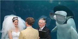 'Cười vỡ bụng' với loạt ảnh chế của chú cá heo FA mặt thộn