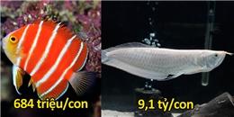 10 loài cá nhiệt đới có giá cao ngất ngưởng