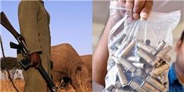 Tranh cãi quanh việc cho phép 'bắn người' để cứu lấy loài tê giác