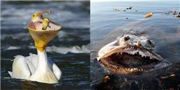 8 loài động vật tham ăn nhất thế giới