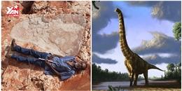Phát hiện dấu chân khủng long lớn chưa từng thấy ở Úc