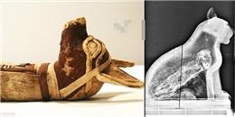 Phát hiện xương người trong xác ướp chó sói thời kì cổ đại