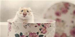 Rụng tim với những khoảnh khắc 'cute hột me' của các em hamster