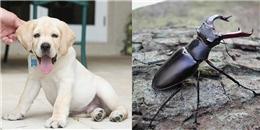 Top 13 thú cưng đắt 'xắt ra miếng' chỉ dành cho giới siêu giàu