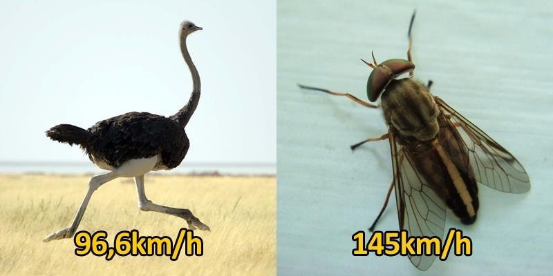 Hoa mắt với những loài vật nhanh nhất quả đất
