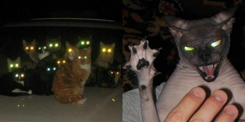 """Ám ảnh loạt hình loài mèo với đôi mắt """"như quỷ dữ"""""""